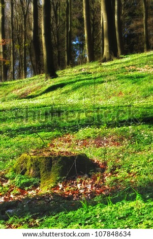 A photo of the forest in green dress - stock photo
