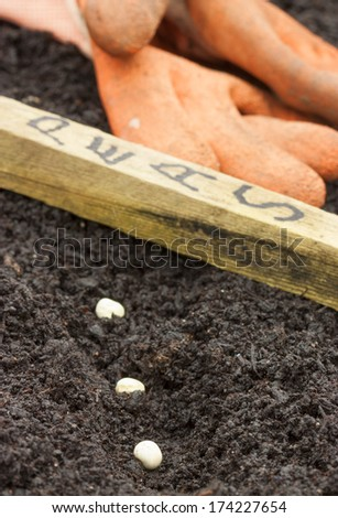a photo underground of a pea root - stock photo