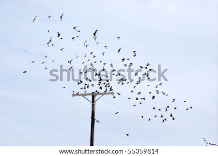 A photograph of a flock of birds flying above a power line.