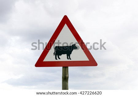 A photograph of a new cow / cattle (warning) sign taken on a rainy and cloudy day