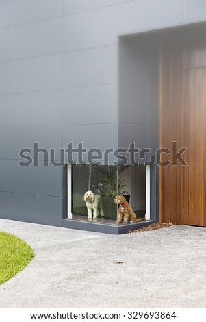 A photograph of a white dog and a brown dog waiting in front of a low window at a house with timber and aluminium cladding and fog in the image - stock photo