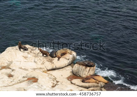 A photograph of some sea lions at La Jolla Cove, San diego. La Jolla Cove is a small, picturesque cove and beach that is surrounded by cliffs in La Jolla, San Diego, California.