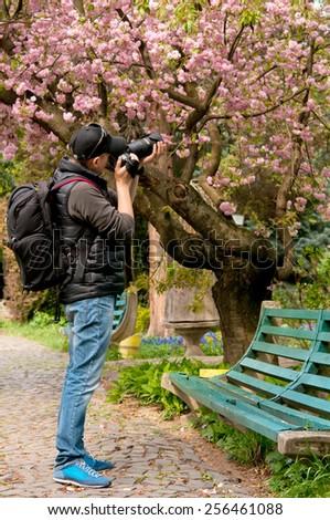 a photographer takes pictures off flowering of sakura - stock photo