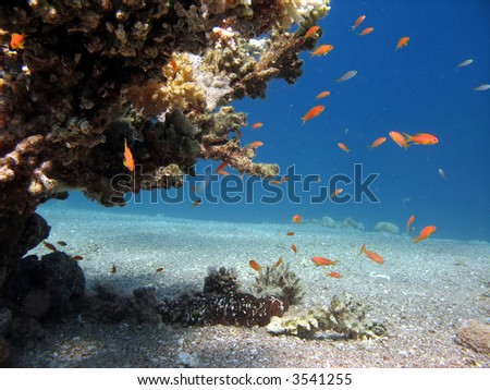 A picture of a coral reef teeming with life. shot in the Red Sea - stock photo
