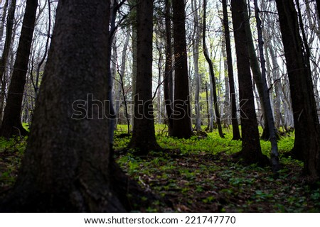 A picture of a forest.