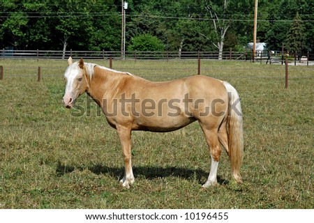 A picture of a horse taken at a ranch in Indiana