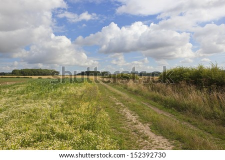 a picturesque agricultural landscape in the yorkshire wolds england with a bridleway and corn chamomile flowers in the foreground under a blue cloudy sky in summer - stock photo