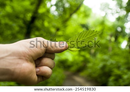 a piece of wood in a man's hand - stock photo