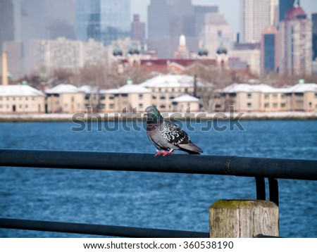 A pigeon on the pier in Liberty State Park in Jersey City NJ with a view of Manhattan in the background. - stock photo
