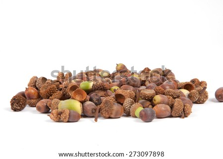 A pile of acorns isolated on a white background. - stock photo