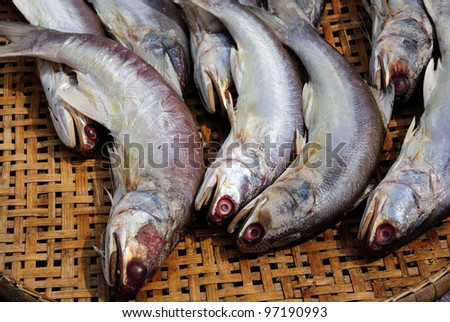 A pile of beautiful big mackerels on a counter