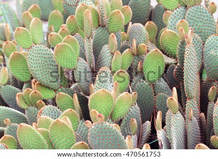 A pile of Cactus Plants!