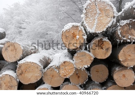 A pile of logs in the winter snow - stock photo