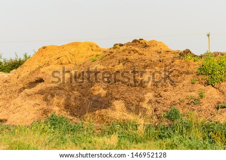 A pile of manure in the evening sunshine - stock photo