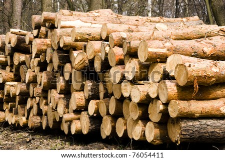 A pile of pine. Logs were stacked in the forest