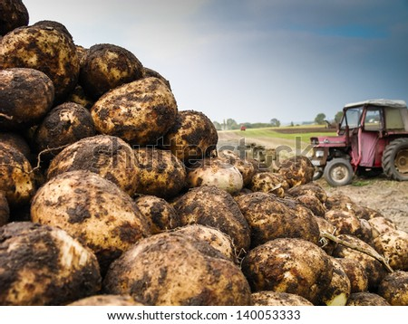 A pile of potatoes on a trailer with vintage tractor out of focus in background