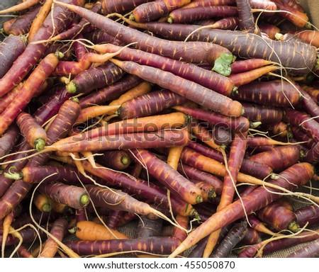 A pile of Purple Haze carrots. - stock photo