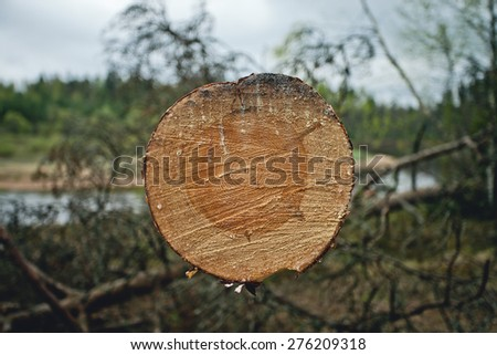A pine sawn with chainsaw - stock photo