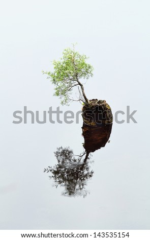 A pine tree reflects in the water as it grows from a stump in Batsto Lake, which is in the pinelands of Hammonton, New Jersey.