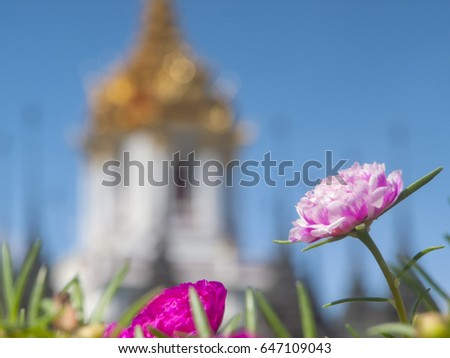 A pink marigold close to the camera in front of a soft-focused and gold-roofed Loha Prasat temple in Bangkok, Thailand