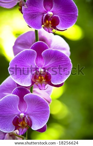 A pink orchid on a blurry green background