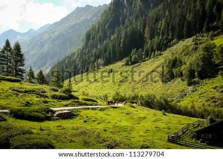 a pittoresque green valley in the austrian alps, zillertal - stock photo
