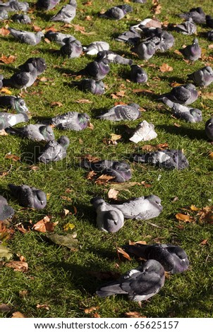 A place in the gardens of St James Park in London where pidgeons relax.