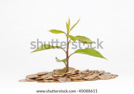 a plant and golden coins isolated on white background