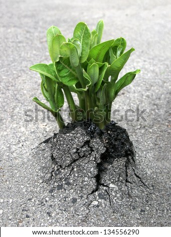 A plant breaks through the asphalt, representing the triumph of nature over humanity's creations. - stock photo