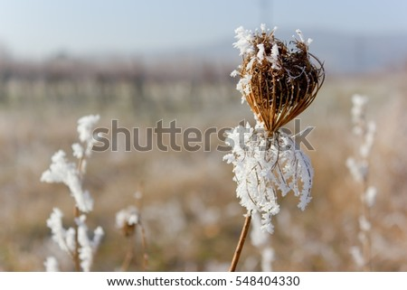 A plant covered in hoarfrost.