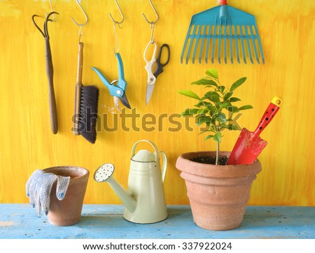 A plant in a flower pot with gardening tools, gardening concept, springtime - stock photo