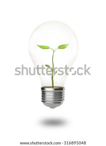 A Plant is growing in a light bulb isolated