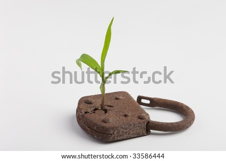 a plant is growing out of a lock