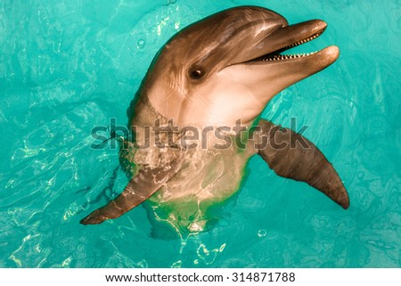 A playful dolphin twisting and jumping out of the water - stock photo