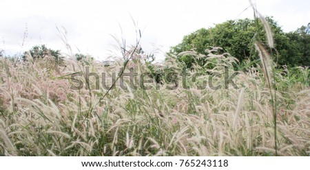 A plenty of flower grass field blowing by the wind and waving in the sunlight of summer season.