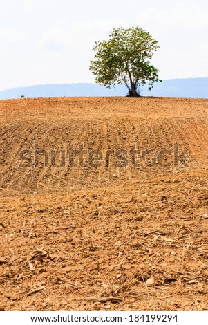 A plowed field and lonely green tree with blue sky