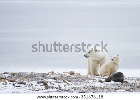 a polar bear mother and cub sitting on rocks against icy white background and looking to the left