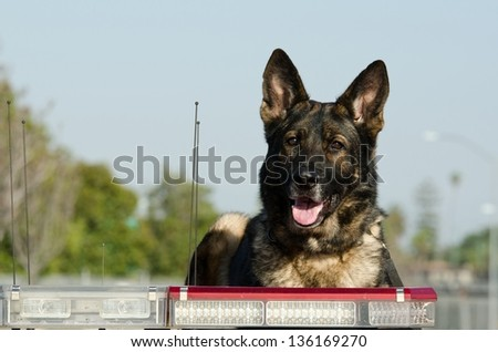 A police dog sitting on top of his patrol car during his shift. - stock photo