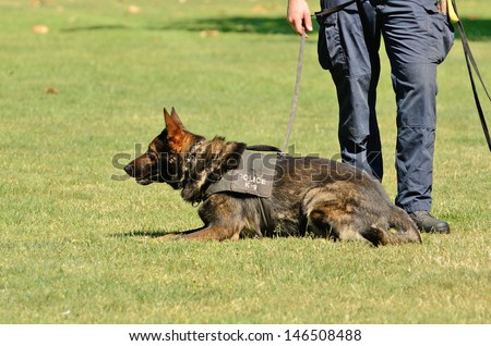 A police K9 dog works with his partner to apprehend a bad guy during a demonstration - stock photo
