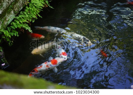 https://thumb1.shutterstock.com/display_pic_with_logo/167494286/1023034300/stock-photo-a-pond-in-a-shrine-of-shizuoka-1023034300.jpg