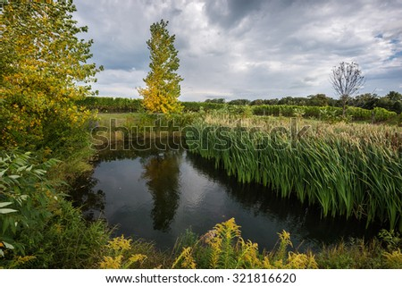 A pond, surrounded by fall trees and green grass, at a vineyard near Niagara-on-the-Lake, Canada - stock photo