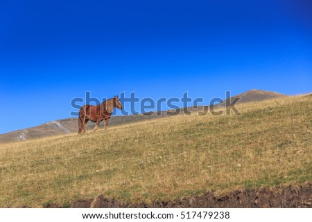 A pony on a mountain slope with grass in the Spanish Pyrenees against a blue sky