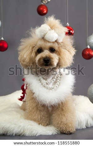 a poodle dressed in a christmas costume surrounded by christmas ornaments on a white fur rug