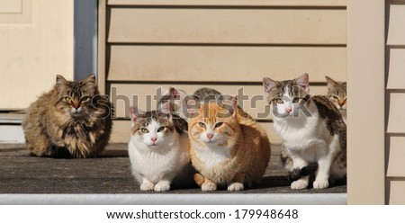 A porch full of pretty cats of various colors and patterns - stock photo