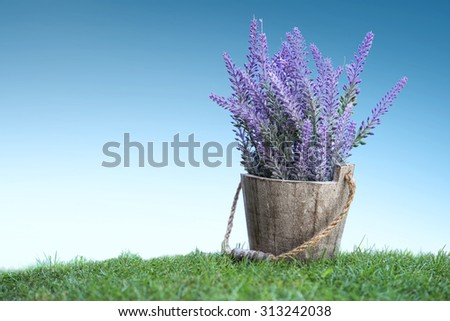 A portrait of a bunch of violet flowers on a wooden pot in green grass under bright blue sky - stock photo