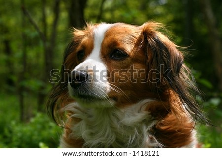 A portrait of a cute dog in a forest.