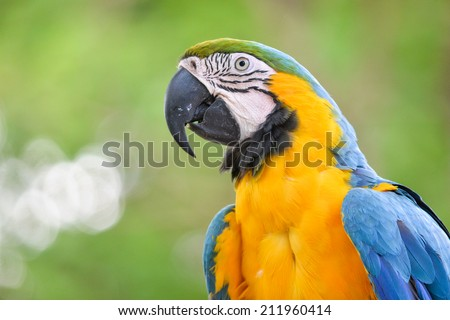 A portrait of a macaw bird - stock photo