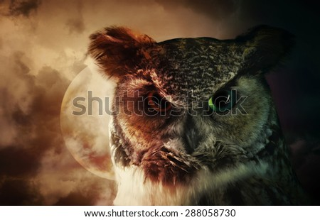 A portrait of a scary wild owl looking down with a moon and night sky in the background for a fear or mystery concept. - stock photo