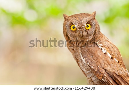 A portrait of an eagle owl - stock photo