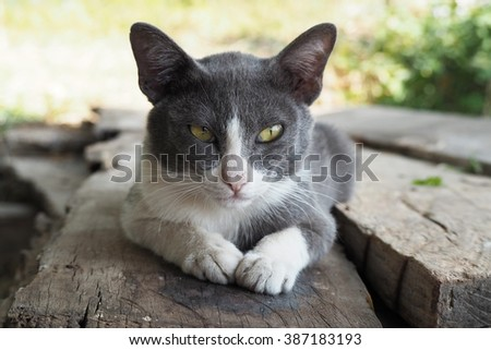 A portrait of cat with nature background.